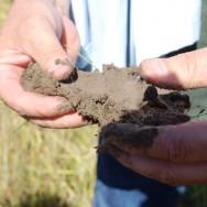 Healthy Soil on Lundberg Family Farm