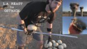 What Happens When A Human Tries to Steal Eggs From An Ostrich Nest | Ft. L.A. BEAST